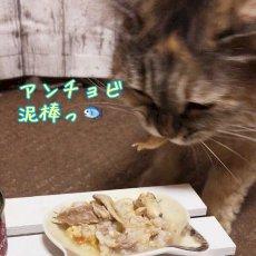 画像5: 最短賞味2021.8・フィッシュ4キャット 猫缶「サバ&アンチョビ」 70g缶 全猫種 全年齢対応ウェット 一般食 fish4cats 正規品 f4c06965 (5)
