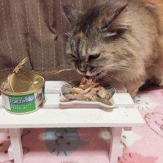 画像6: 最短賞味2022.2・フォルツァ10 猫 メンテナンス イワシ&サーモン 85g×24缶 ウェット キャットフード FORZA10正規品fo05616s24 (6)