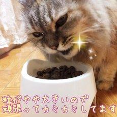画像3: 最短賞味2021.3・レオナルド シニア 50gドライ 高齢猫用 腎臓に配慮 キャットフード LEONARDO 正規品 le44605 (3)