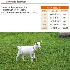 画像7: 最短賞味2021.4・ミルク本舗 オランダ産100%奇跡のヤギミルク 100g 犬猫用 全脂粉乳 パウダー 無添加 無調整mi80159 (7)