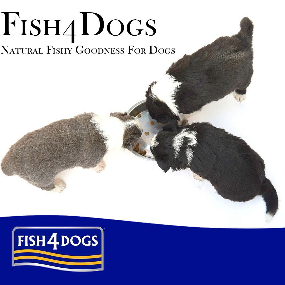 FISH4DOGS 【フィッシュ4ドッグ】