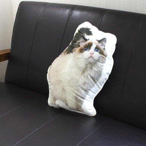 画像1: アンダロ /ラグドール キャット 猫柄クッション【リアルプリント・ポーランド製・ANDARO】 (1)